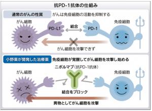 PD-1抗体